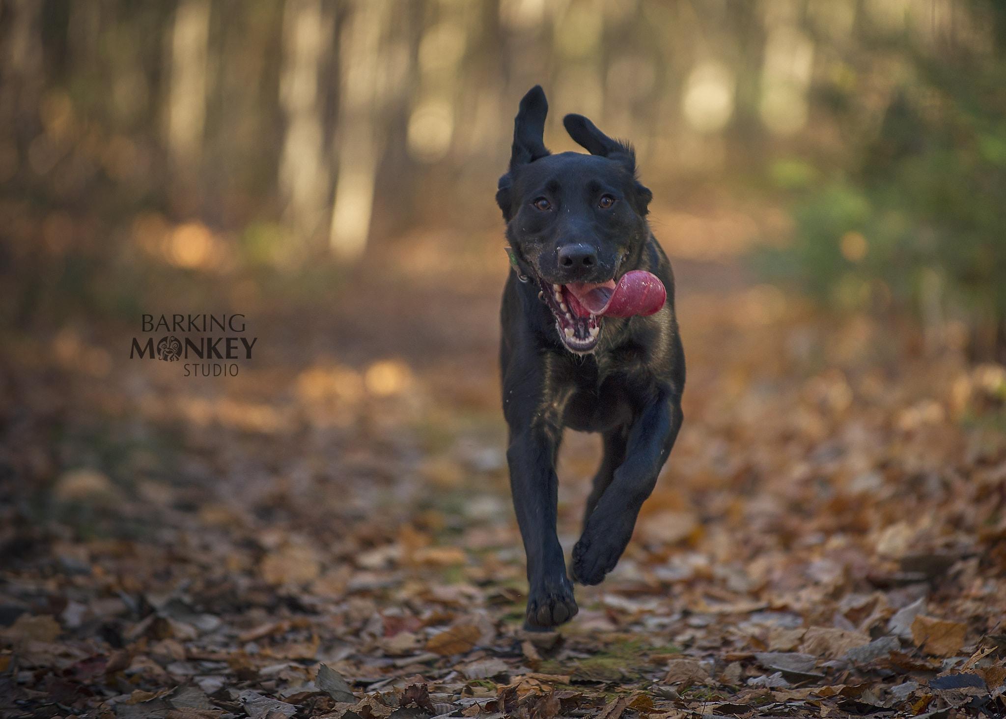 dog action portrait